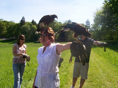 birds of prey handling