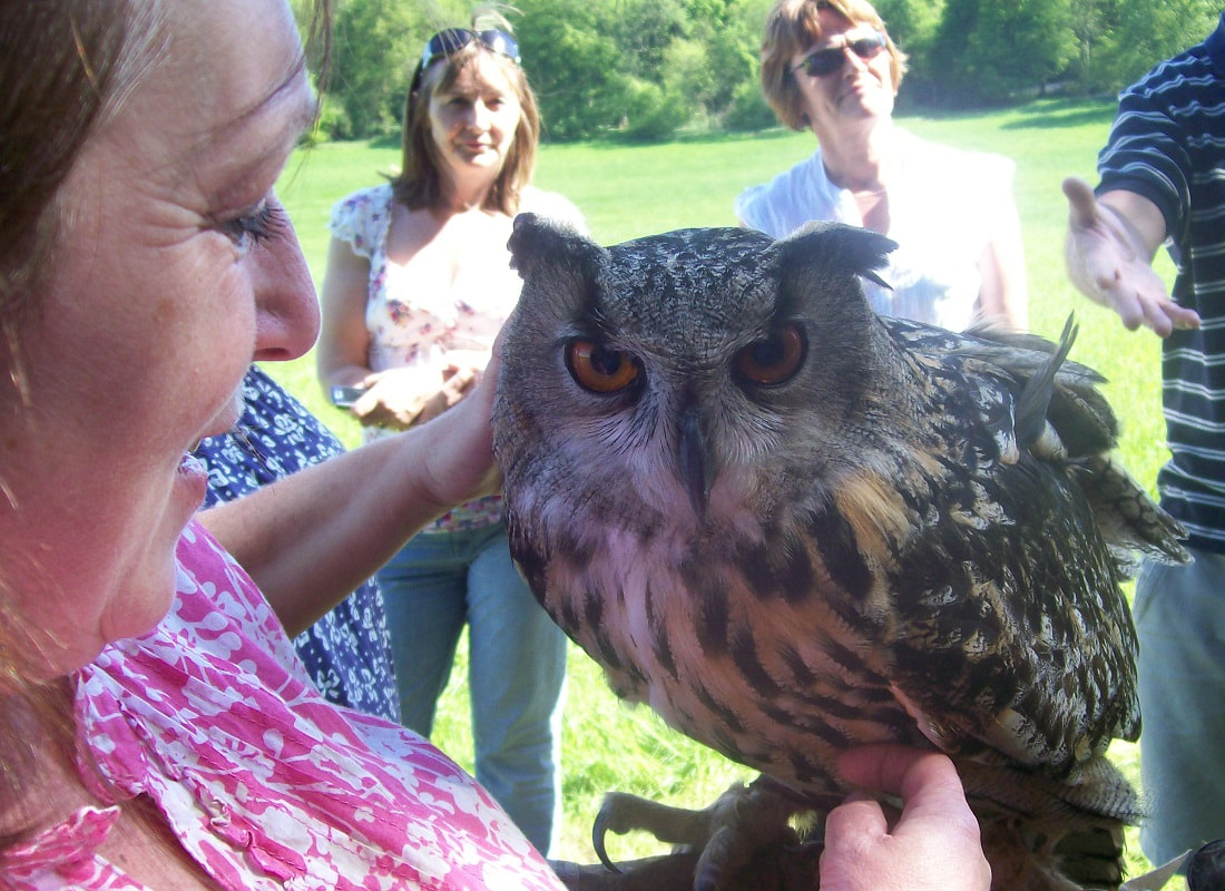 Falconry Display and Birds of Prey Handling