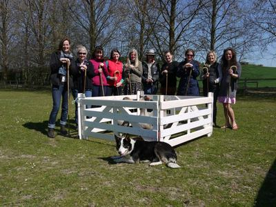 Hen party sheepdog trials